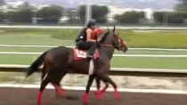 Documentary: How to Become A Race Horse Jockey- Producer
